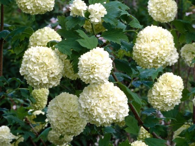 kleine struik op stam rose bloem