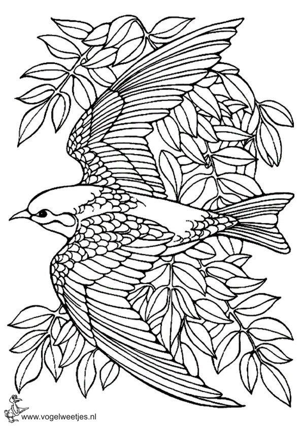 Kleurplaten Over Vogels.Kleurplaten Kleurplaat Vogel In Boom Idee U00ebn Over